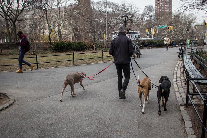 Dog Walker-2918.jpg