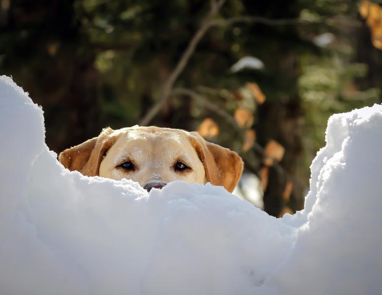 Dog Spotting