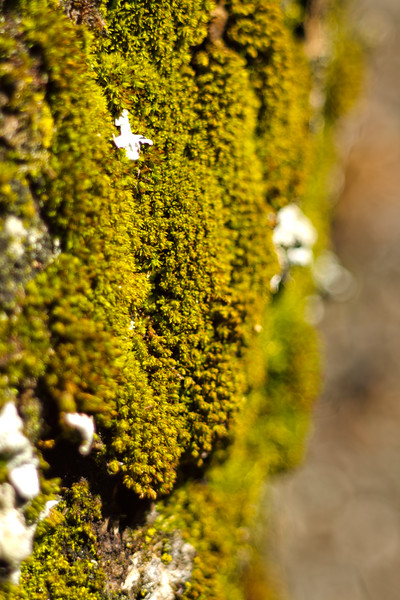 Moss on the Tree 9