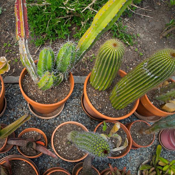 htx-cactus-space012.jpg