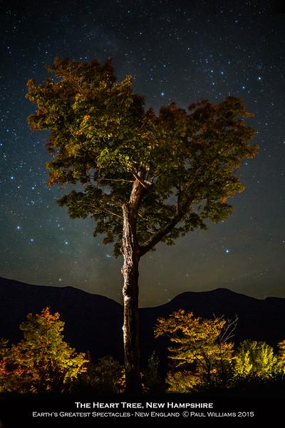 The Heart Tree at night.jpg