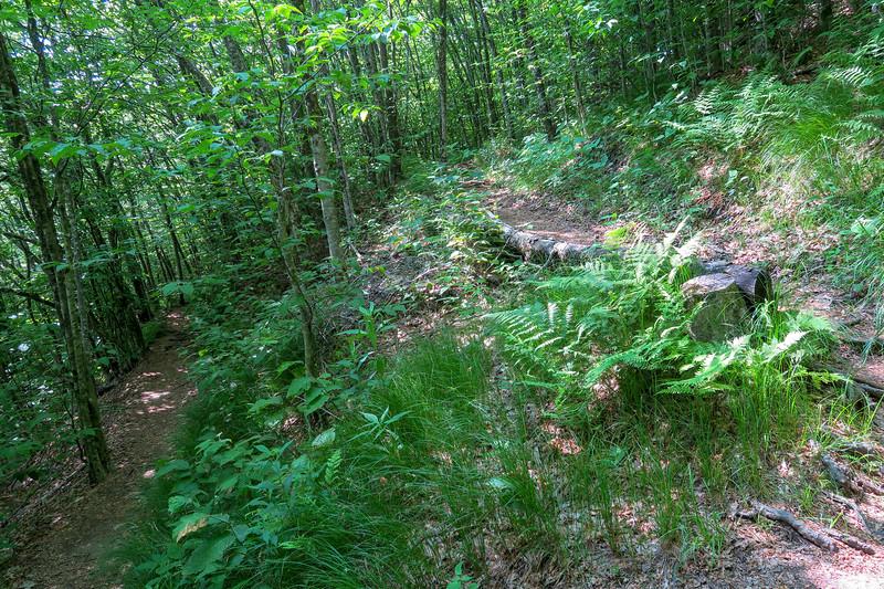 Mountains-to-Sea Trail -- 5,100'