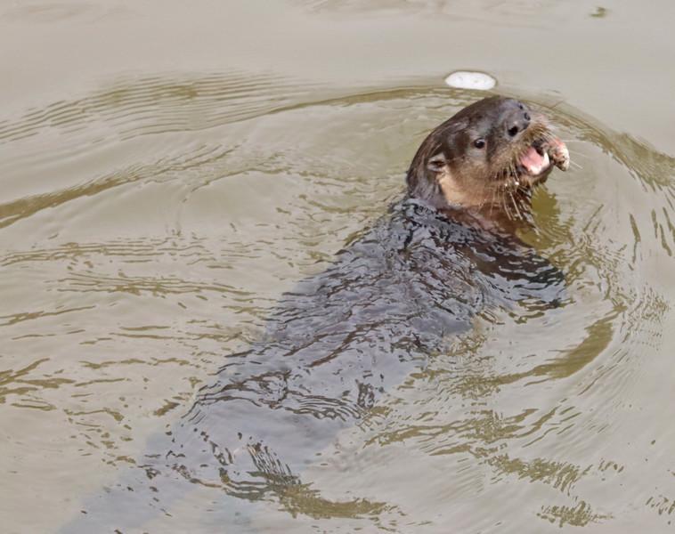Otter 791