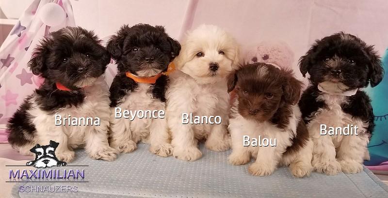 Mystic Pups 031.jpg