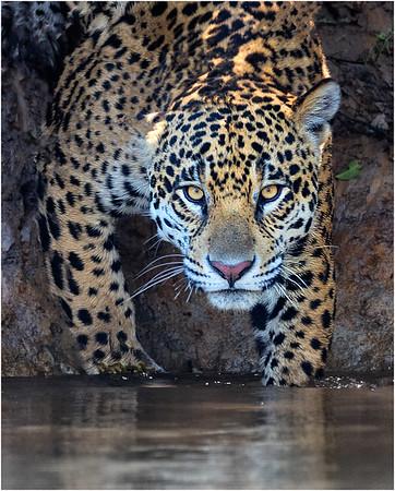 Brazilian Pantanal - August 2017