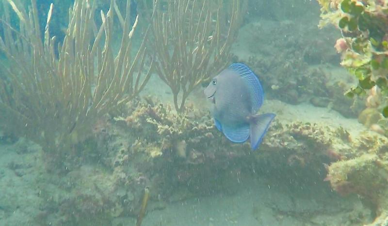 Snorkling with Fury Island Adventure, Key West, FL - Dec. 15, 2019-GOPR1861-1-005.jpg