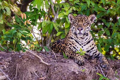 Pantanal 2014