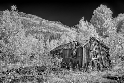 Infrared and Black and White