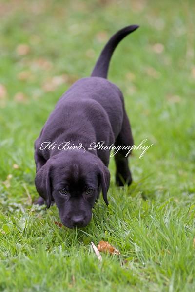 Anette puppy  2662.jpg