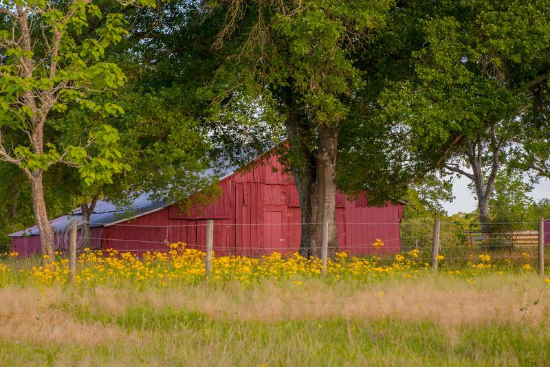 2016_4_9 Texas Wildflower Shoot-8983.jpg