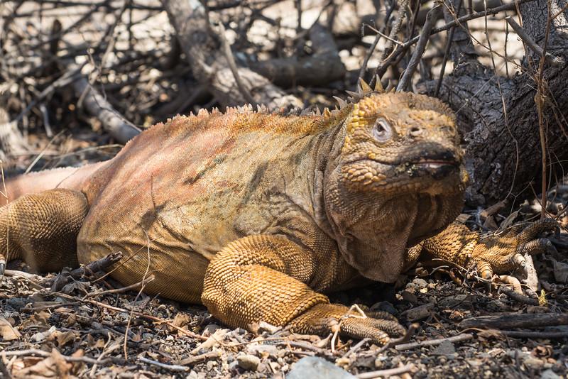 Galapagos-Best-071.jpg