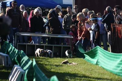 Genesee Valley Hunt Races (2008)