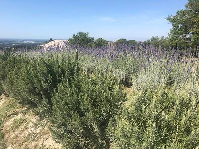 Rivers En Provence