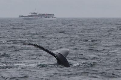 2017 07 Cape Ann Whale Watch
