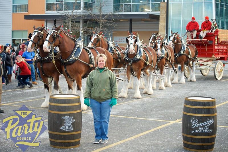 Clydesdale Portraits 186.jpg