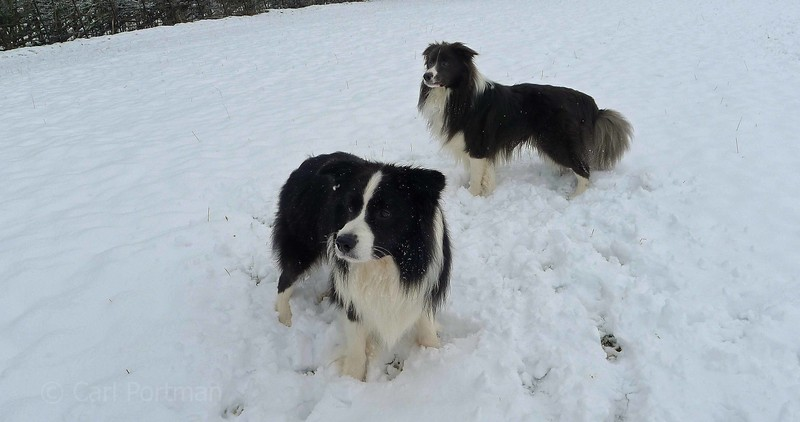 out with dogs in snow 2013 (1).JPG