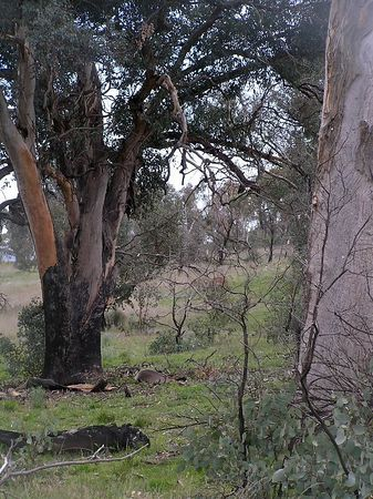 Mount Taylor October 2005