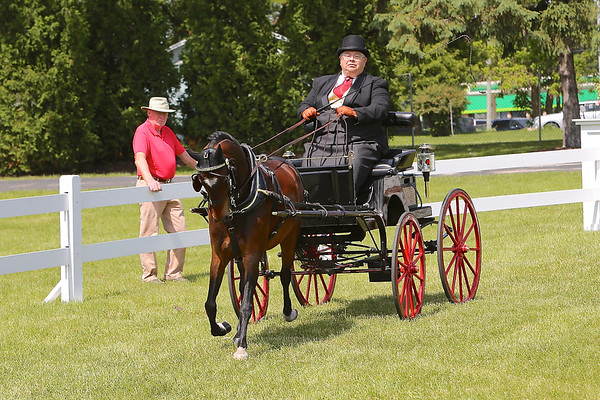 2014 CCF SMALL PONY OPEN DIVISION