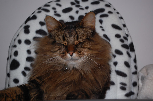 Milly the Cat 22.3.14