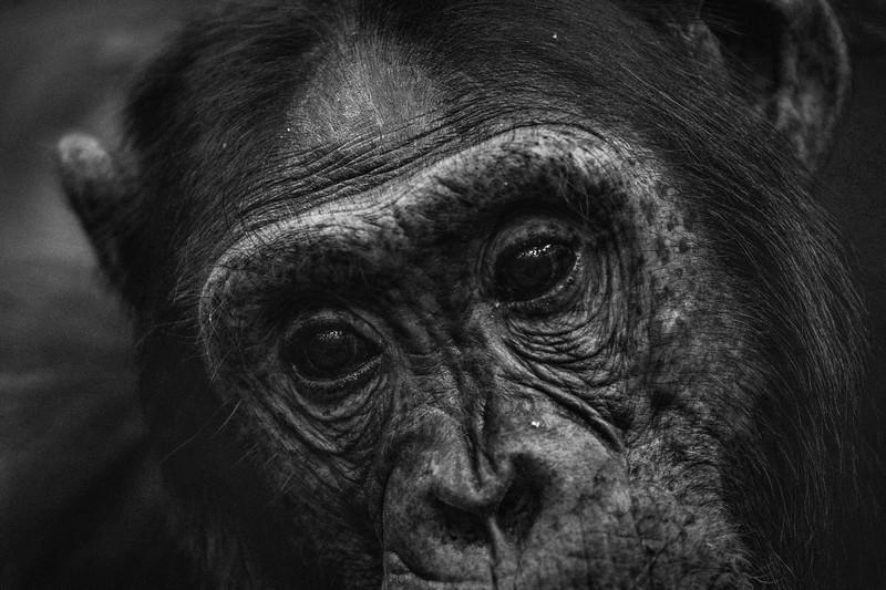 Uganda_T_Chimps-1688.jpg