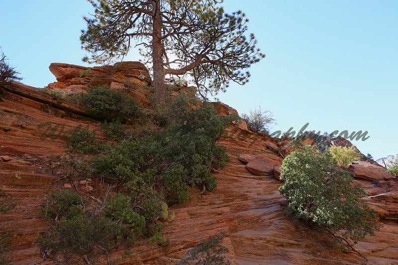 Chain trail 7 backlit tree.jpg