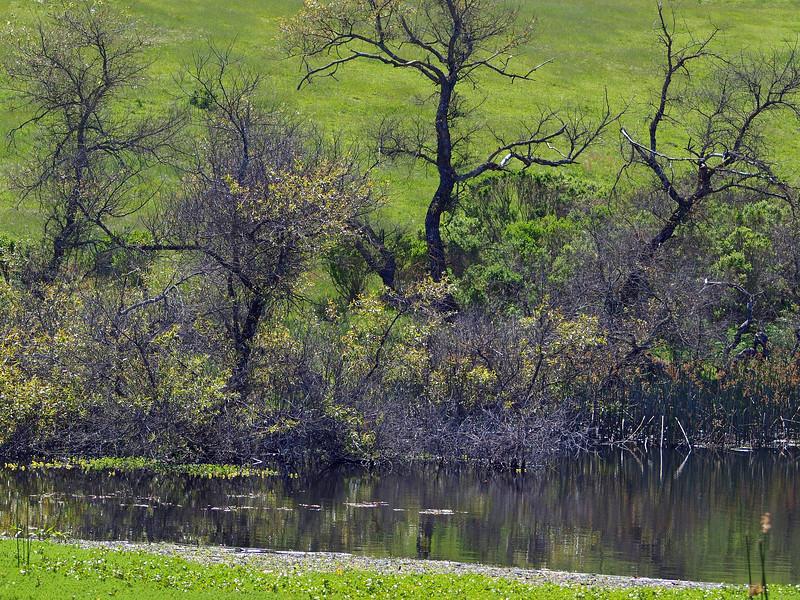 Pond, Briones