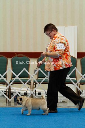 Veteran Sweepstakes Dogs 9-11 years