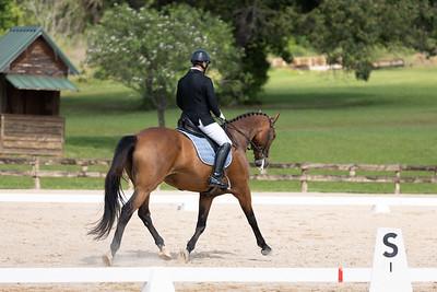 Horse 376