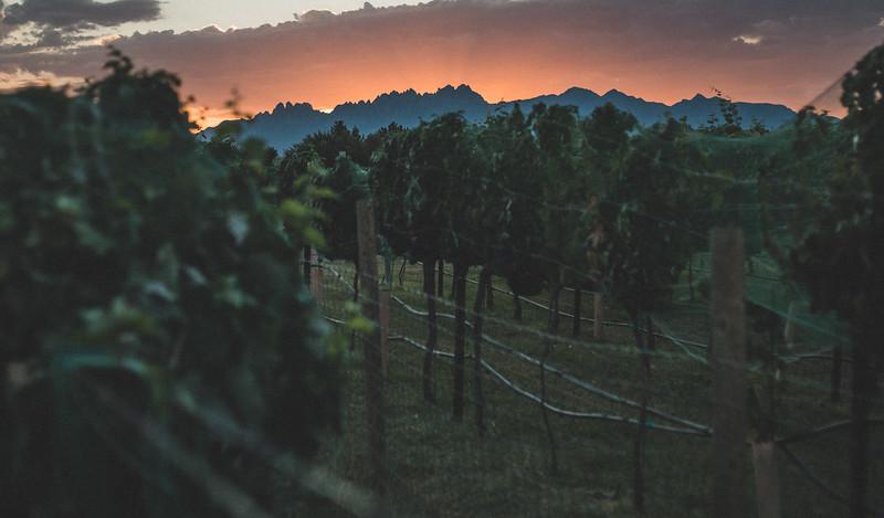 2020 Harvest | Grape Harvest | Mesilla Valley Estates | Merlot