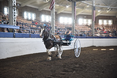 Clydesdale Ladies Cart