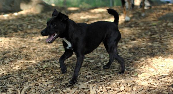 PICS JUNE 17::faith patterdale  terrier
