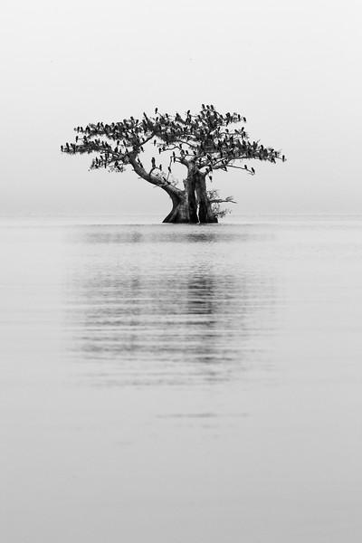 Cypress_Swamps_1117_PSokol-2781.jpg