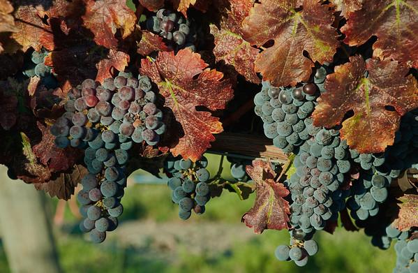 Livermore & Vineyards