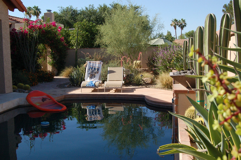 20120607_Scottsdale Back Yard_008.JPG