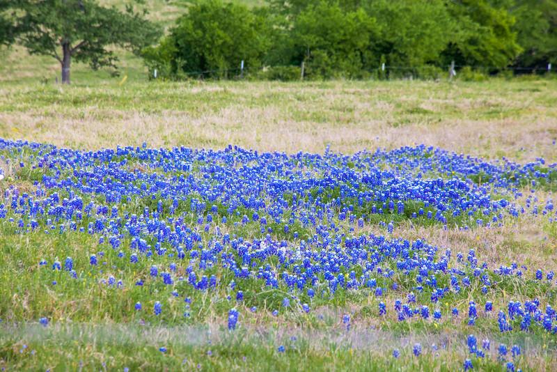 2016_4_9 Texas Wildflower Shoot-8758.jpg
