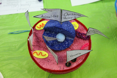 4th Grade Cell Projects