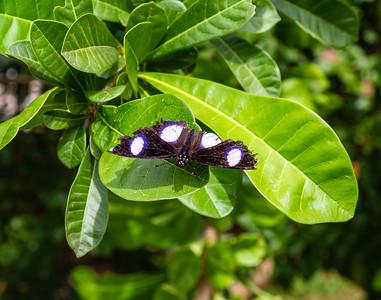Butterflies from Ado Ekiti Nigeria