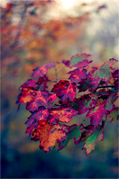20111019_Autumn10.png