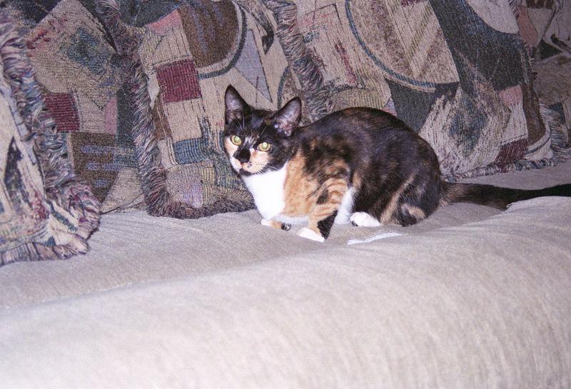 2003 12 - Cats 29.jpg