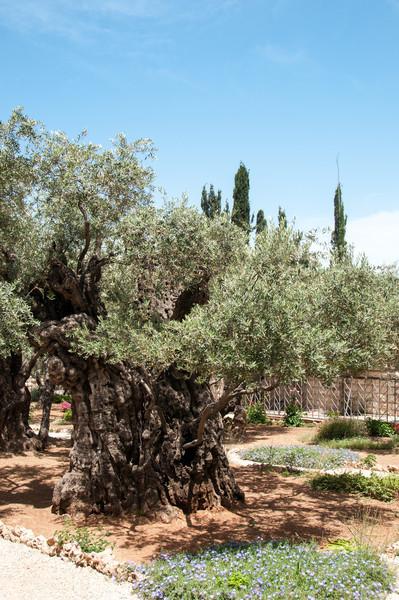 Israel_1584.jpg