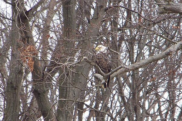 Eagle Watch LBL 2010