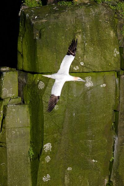 Seabirds and Coastal Birds