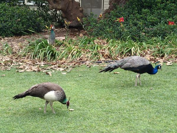 LA Arboretum May 2014