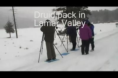 Yellowstone Wolf Discovery Jan 2008