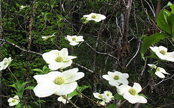 Plants - 2010