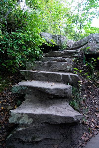 forest steps 2.jpg