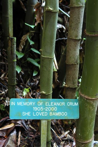 195- 20080410- Hawaii 15- Enroute to Hilo- Hawaii Tropical Botanical Gardens DSC_2818.jpg
