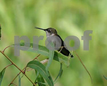 four-hummingbird-feeder-hints