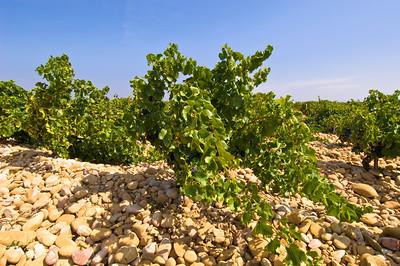 Europe, France, Provence, Chateauneuf-du-Pape, famous vineyards