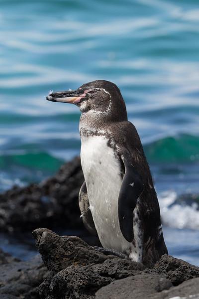 Bartolome Island, Galapagos - May, 2017